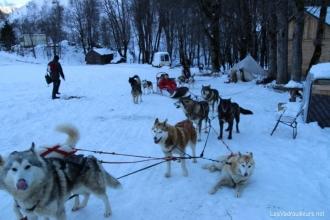 La montagne en hiver ce n 39 est heureusement pas que le ski for Balade chien de traineau doubs