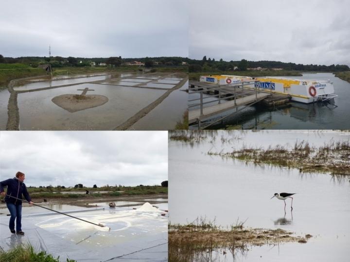 Que faire en Vendée : les Salines