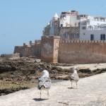 Excursion Marrakech Essaouira : découvrir l'ancienne Mogador