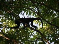Sortie-au-Costa-Rica