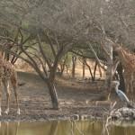 Excursion « Réserve animalière de Bandia » (Sénégal) : notre avis