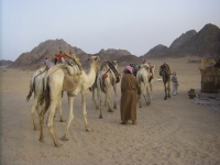 Sortie en quad dans le désert égyptien