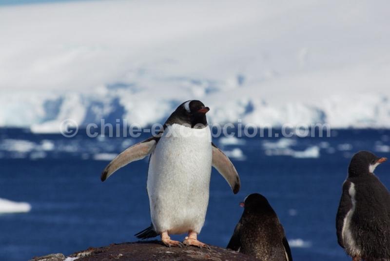 Croisière en Antarctique