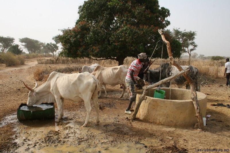 Balade en calèche dans les villages