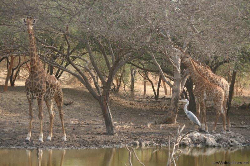 Réserve animalière de Bandia