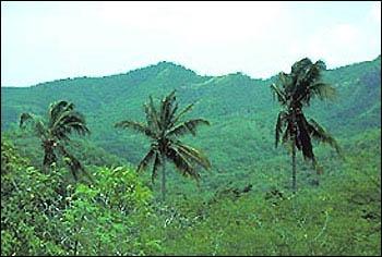 ATG24 - Antigua