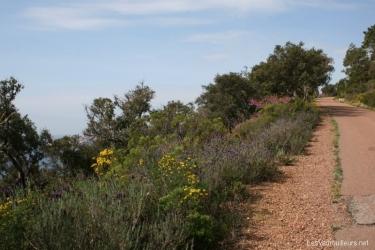 Le site naturel du Massif de l\'Esterel