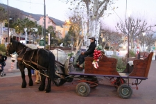 Balade en charrette - Grasse