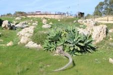 Nature et ruines de temple de Ggantija