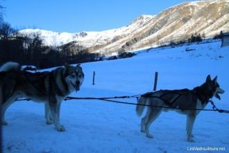 Les chiens sont prêts à partir