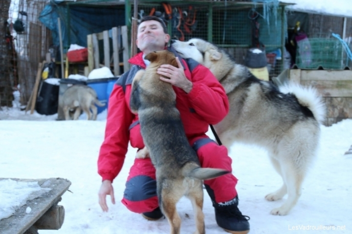 Des chiens affectueux ...