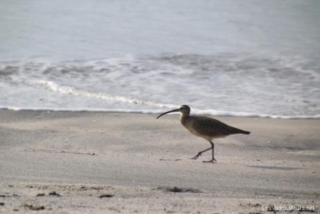 Oiseau sur la plage