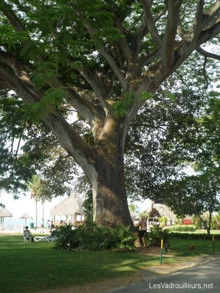Le grand arbre de l'hôtel