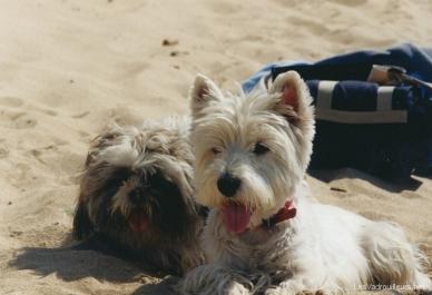 Lutin et Otis à la plage
