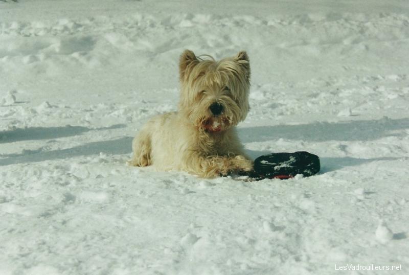 Lutin à la neige