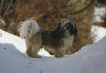 Otis à la neige