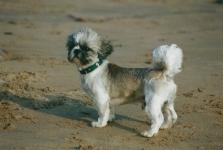 Otis à la plage