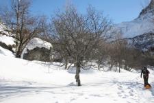 Paysage d'hiver à la montagne