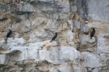 Oiseaux sur les falaises du lac