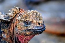 Galapagos (c) John Solaro - Flickr