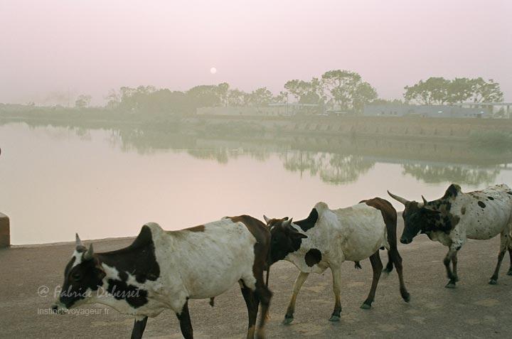 La belle Mopti et le fleuve Niger