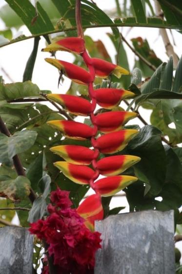 Assez L'île de La Réunion, ce petit paradis tropical de la France  PE28