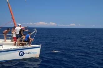Autre bateau venu voir les dauphins