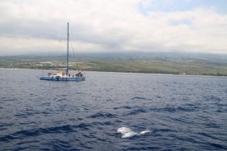 Catamaran venu voir les dauphins