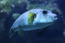 Aquarium Saint-Gilles-Les-Bains