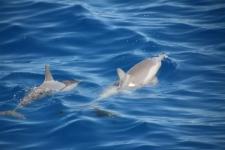 Voir des dauphins avec Le Grand Bleu