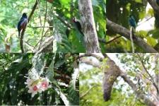 Oiseaux, fleurs, termitière