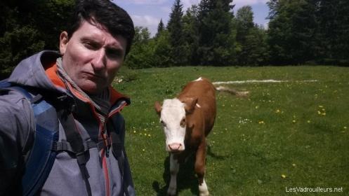 Selfie avec une vache