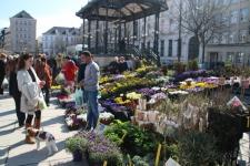 Marché aux fleurs Kouter