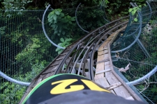 Rainforest Bobsled