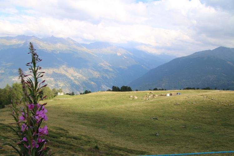 été dans le Val d\'Hérens : alpage de Thyon