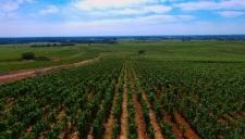 Art de vivre - Vignes de Bourgogne