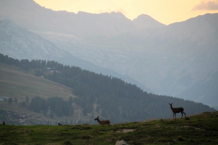 Val d'Hérens : observation de la faune