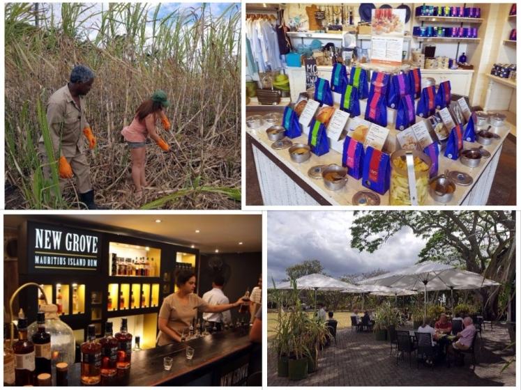 Se cultiver à l'ile Maurice : L'Aventure du Sucre