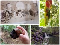 Se cultiver à l'ile Maurice : La Maison Euréka