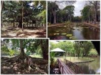 Se cultiver à l'ile Maurice : Le Jardin Pamplemousses