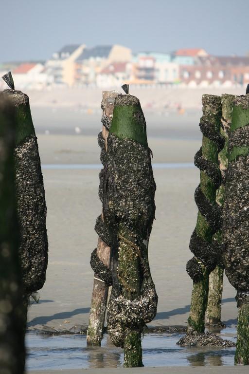 La Baie de Somme : le parc à moules de Quend-Plage
