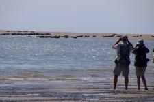 La Baie de Somme : observer les phoques
