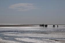 La Baie de Somme : traverser la baie à pied