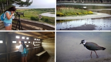 La Baie de Somme : Le Parc du Marquenterre