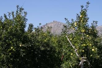 Estartit Costa Brava : arbres fruitiers