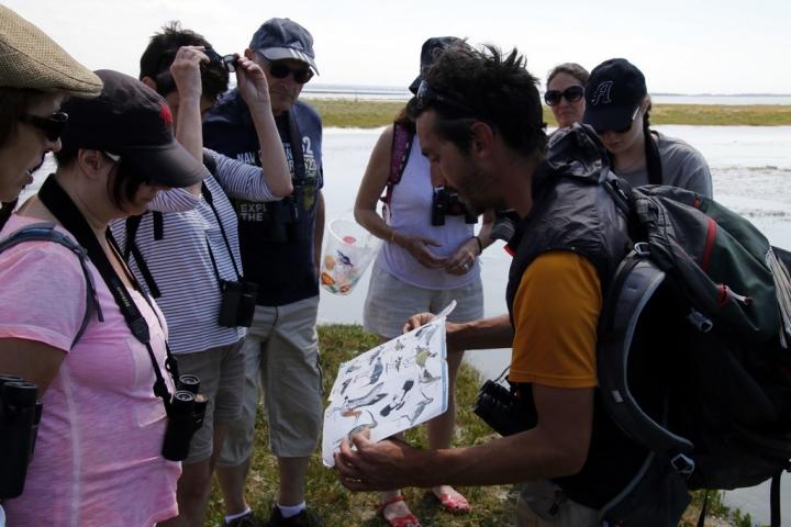 Découvrir la Baie de Somme : Sortie observation phoques et oiseaux