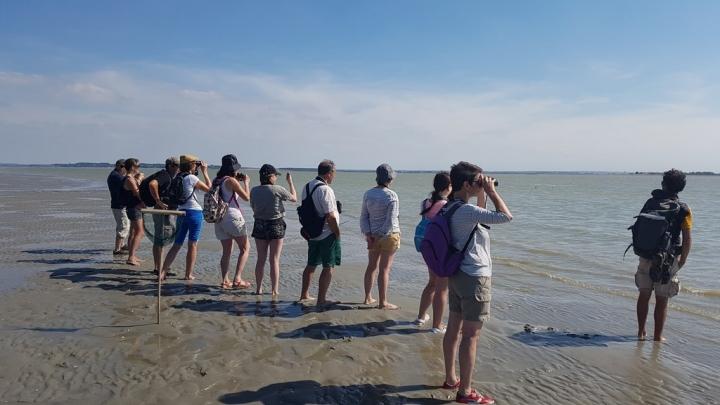 Découvrir la Baie de Somme : Observer les phoques