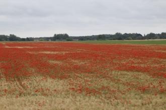 Découvrir la Baie de Somme : les bas champs