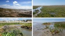 Découvrir la Baie de Somme : Paysages et flore de la baie