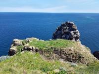 Pays de Fréhel : Les oiseaux au Cap Fréhel